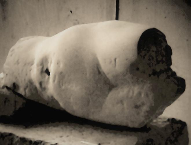 ionescu roxana torso piatra